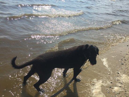Ocean Springs, MS: Front Beach