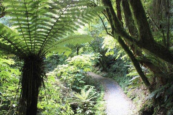 Owaka, Yeni Zelanda: photo0.jpg