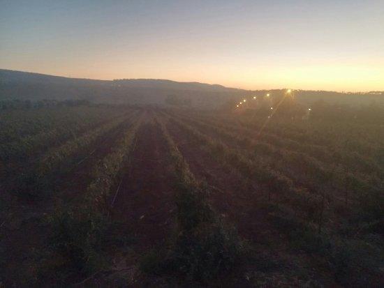 Kfar Kish, Israel: Ziv Winery