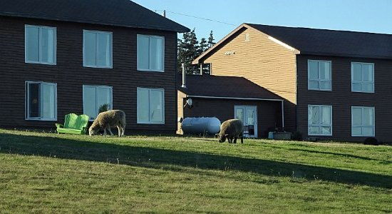 Westport, Kanada: The neighbours come to visit