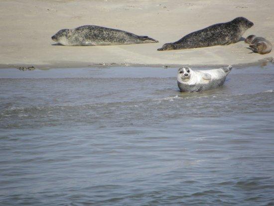 Hollum, Nederländerna: This is the Seal Island