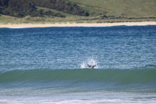 Waikawa, Nouvelle-Zélande : photo1.jpg