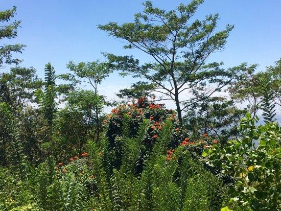 Beragala, Sri Lanka: photo3.jpg