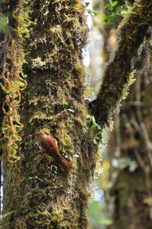 San Gerardo de Dota, Коста-Рика: A parte del Quetzal, dentro del Parque hay una enorme variedad de pájaros, muy fáciles de ver,.