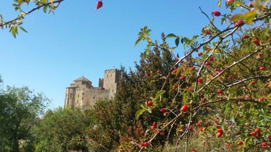 Aragón, España: 20160924_123022_large.jpg