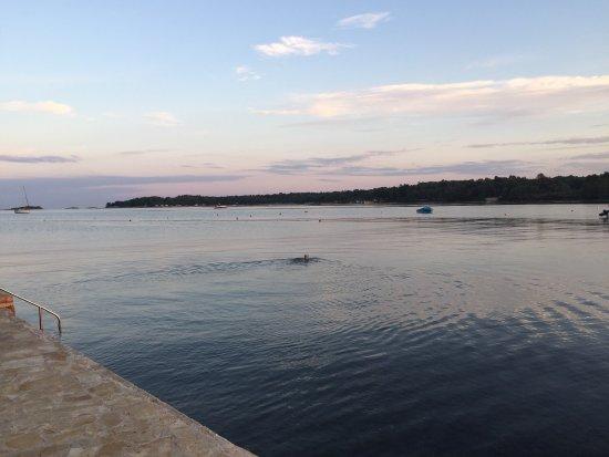 Funtana, Kroatia: photo1.jpg