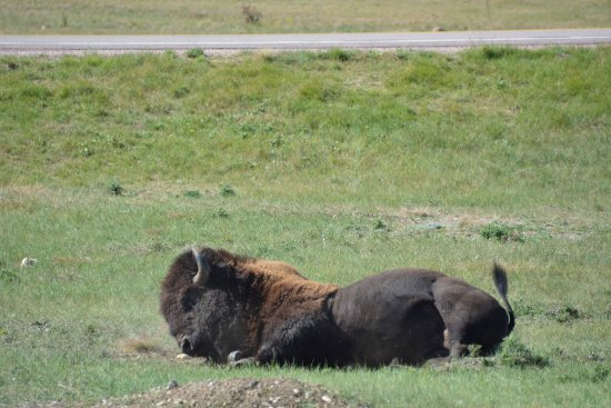 Custer State Park: Custer State Park