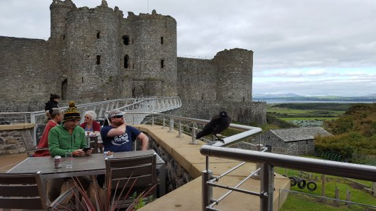 Harlech, UK: View of the gatehouse from the cafe
