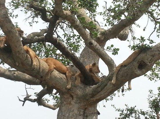 Kasese, Uganda: Queen Elizabeth National Park, southern Sector