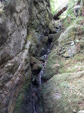 Christow, UK: Canonteign Waterfalls and Country Park