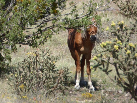 And another wild horse hiding from us! - Picture of New Mexico Jeep ...