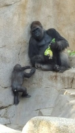 San Diego Zoo Safari Park: 20160923_091459_large.jpg