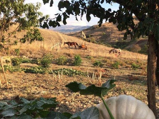 Castiglione di Sicilia, Italia: The view from an Agriturismo..