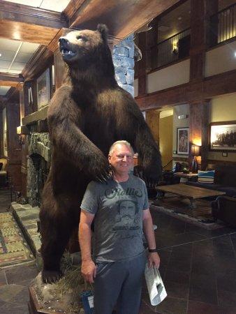Whitefish, MT: Big bear in lobby