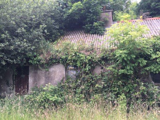 Corofin, Ирландия: Ancestral home.