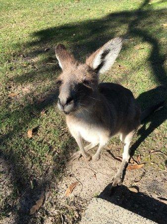 Arrawarra, Australien: photo0.jpg