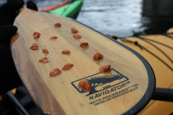 Stan Cook Sea Kayak Adventures Day Tours: A light snack included!
