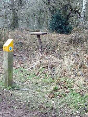 Nottinghamshire, UK: Comedero de pájaros