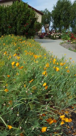 Solvang, Kalifornien: California Poppies