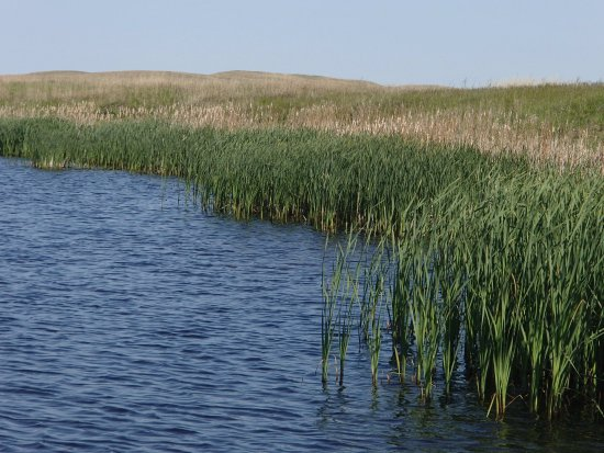 Ainsworth, NE: Dense cattails around Yelowthroat Lake