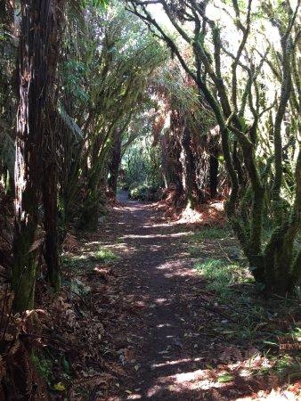Ohakune, Νέα Ζηλανδία: photo2.jpg