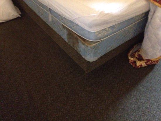 American Holiday Mesa Verde Inn Cortez: photo0.jpg