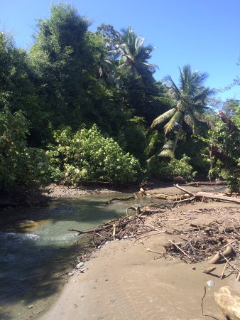 Пуэрто-Хименес, Коста-Рика: una reserva biológica espectacular