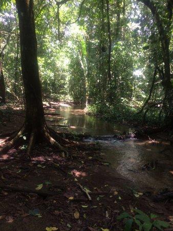 Пуэрто-Хименес, Коста-Рика: el maravilloso bosque tropical húmedo