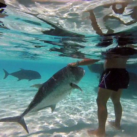 The Vaka Cruise: Giant fish that act like pets!