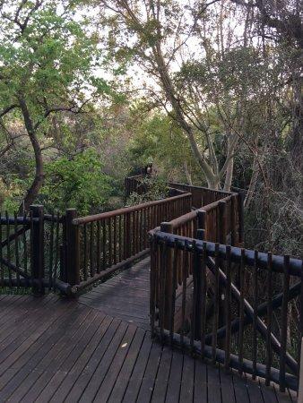 Skukuza, Afrique du Sud : photo3.jpg
