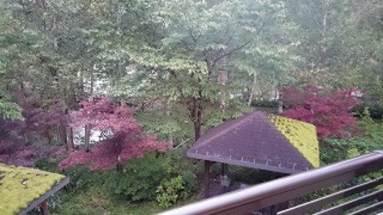 Sobetsu-cho, Japón: 2階の部屋からの眺め。渓流の音が聞こえました。