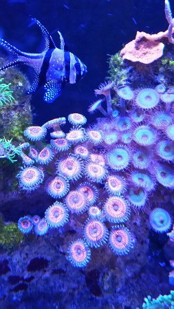 Oregon Coast Aquarium: 20160909_142613_large.jpg