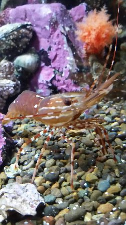 Oregon Coast Aquarium: 20160909_142843_large.jpg