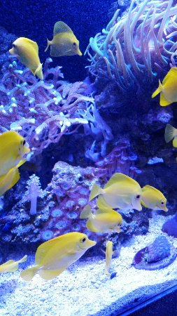 Oregon Coast Aquarium: 20160909_142530_large.jpg