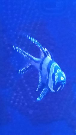 Oregon Coast Aquarium: 20160909_142354_large.jpg