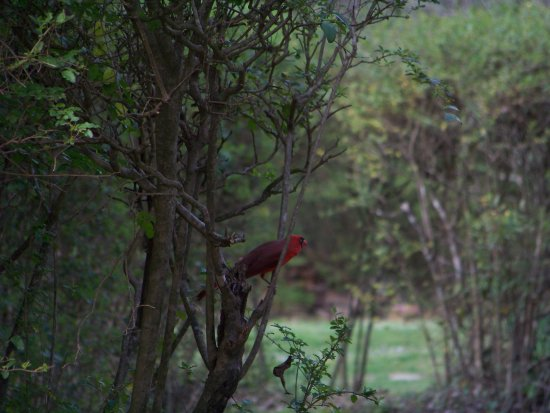 "Oxford, MS: A ""visitor""--his wife Estelle liked to paint and bird watch"