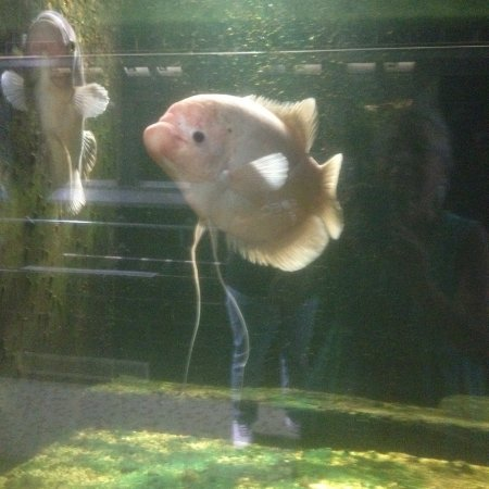 Belle Isle Park: Aquarium resident