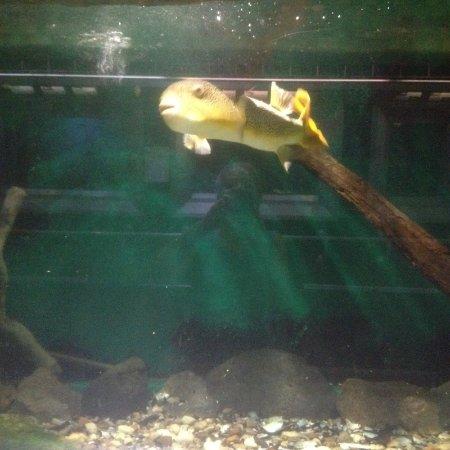 Belle Isle Park: Curious fish