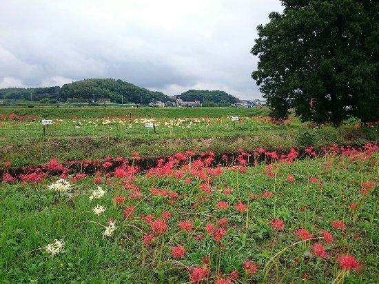 Handa, Japonia: DSC_0419_large.jpg