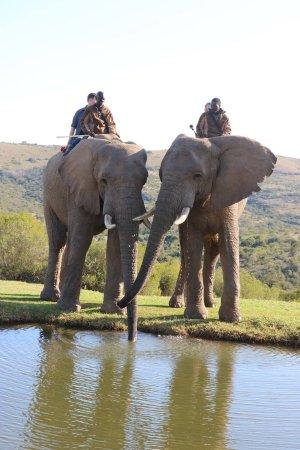 Addo Elephant National Park, Sør-Afrika: photo1.jpg