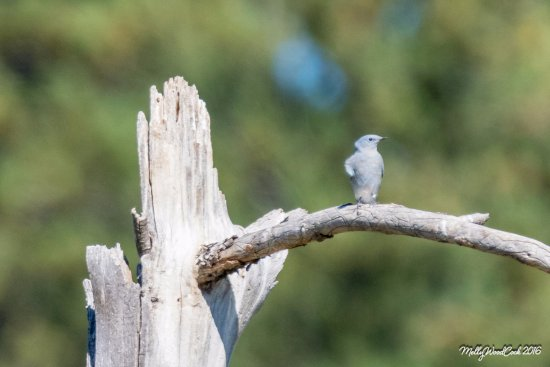 Custer State Park: Funny birdie with his hand on his hip