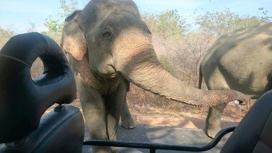Tissamaharama, Sri Lanka: DSC_0460_large.jpg