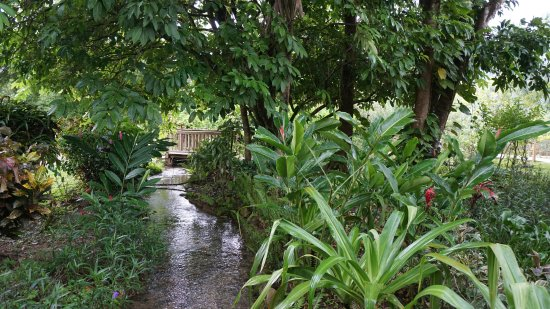 Belmopan, Belize: The little stream running through the property that leads to the river