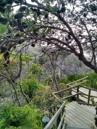 North Stradbroke Island, Australien: The stairs down to Frenchman's Beach