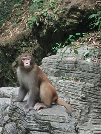 Yichang, China: macaque