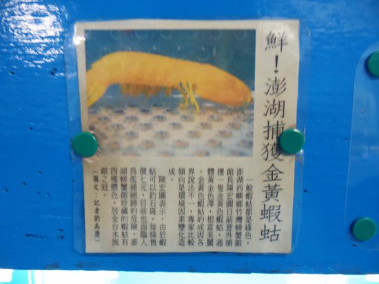 Penghu County, Taïwan : 黃金蝦蛄