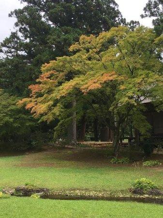 Motsu-ji Temple: 庭園向かって左奥 遣水の周辺 9月末で紅葉が始まっていました。