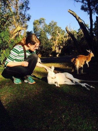 Whiteman, Australia: photo0.jpg