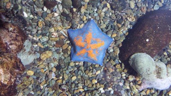 Noboribetsu, Japan: 給人摸的海星