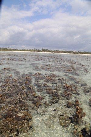 Breezes Beach Club & Spa, Zanzibar: photo2.jpg